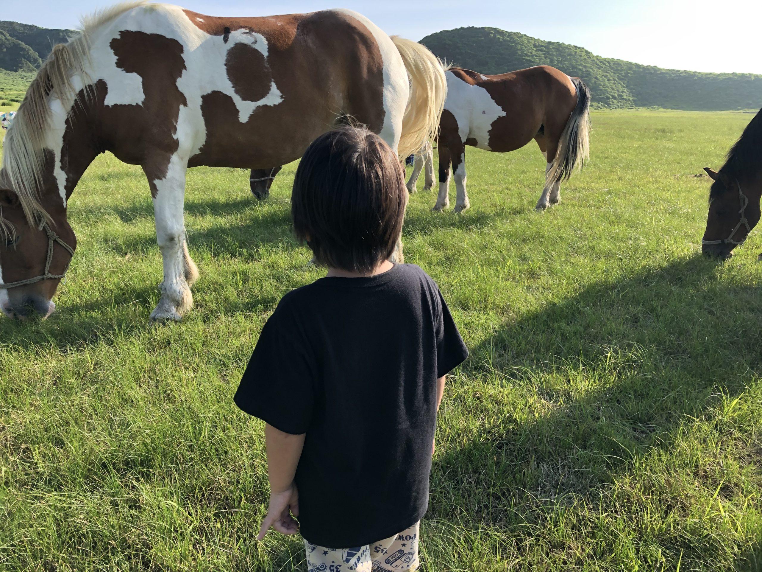 熊本県阿蘇市の草千里で、大きな馬を見に行こう